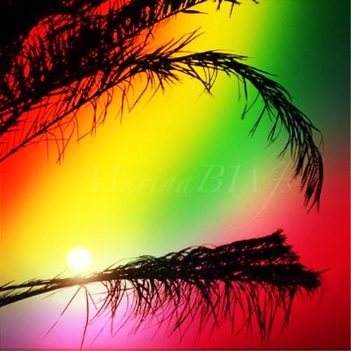 sunset sun color tree photo colorful dubai image palm mygearandme mygearandmepremium uploaded:by=flickrmobile flickriosapp:filter=nofilter marinabwfs