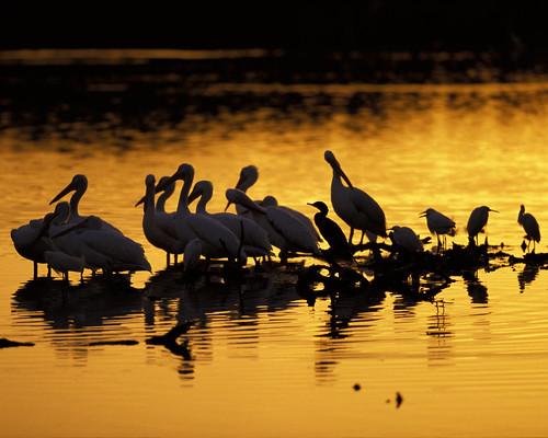 氣候變遷可能影響濕地物種遷移的路線和時間點。(圖片來源:USFWS Headquarters)