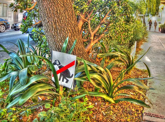 Urban Garden, HDR