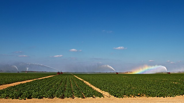 Farming the Everglades, January 25, 2013, Florida, Dan Conlin.