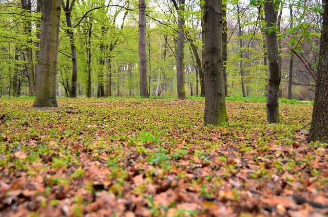 Árboles en otoño en el Tiegarten