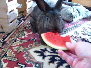 Sherman Vs Watermelon