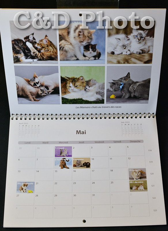 Calendrier 2013 des chats de race par Cnd Photo