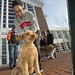 20121208_mac_dogdays_317