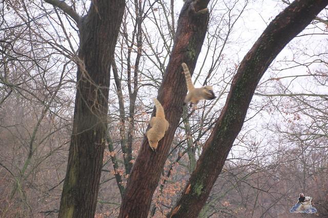 einfach mal eben von Baum zu Baum springen :-)