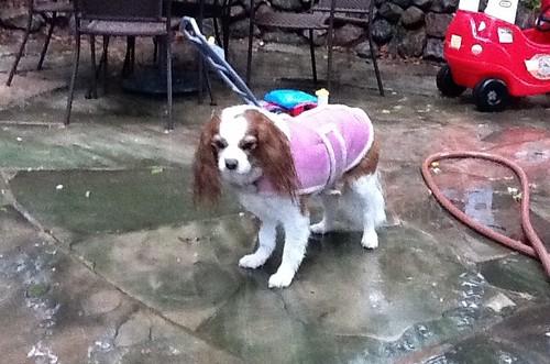 verywetdog