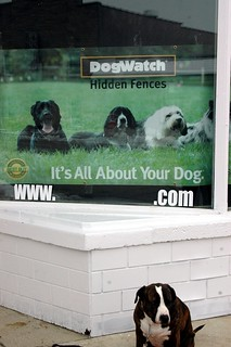 It's ALL About Your Dog.COM