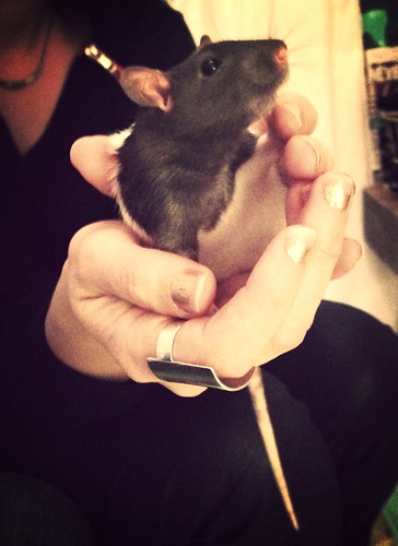 Introducing Eden's new rat, Paris.