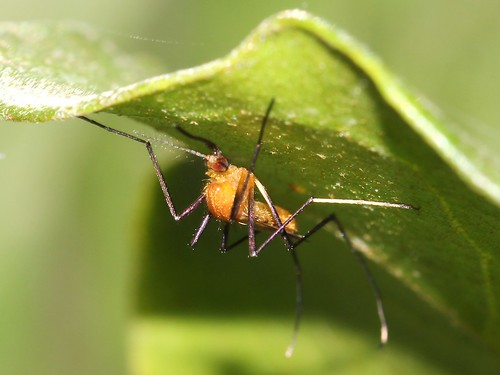 Sicherheit auf Reisen: Mosquito