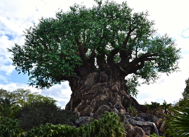 tree of life - animal kingdom