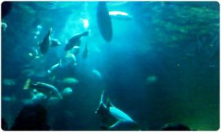 Akuraium SeaWorld