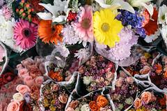 1585 Flowers