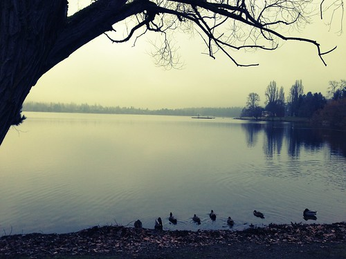 Greenlake (in the morning)