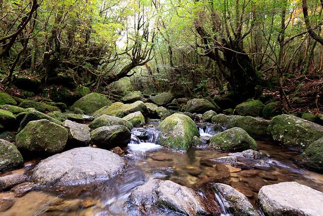 Isla de Yakushima, Japón