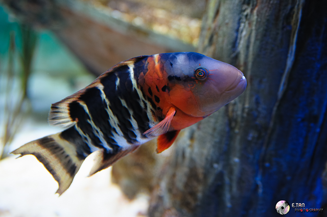 S.E.A Aquarium - 003