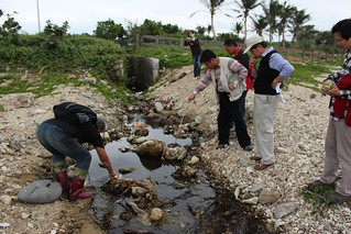 被遊客丟垃圾的小溪流,常可見南台灣小螃蟹,是牠們的棲息地。