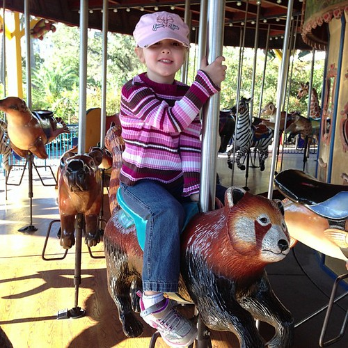 33:365 Riding the Red Panda #houstonzoo
