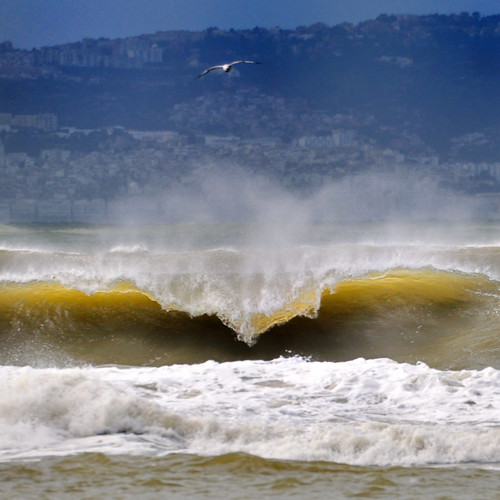SEA + RUBY by omar lomaxe
