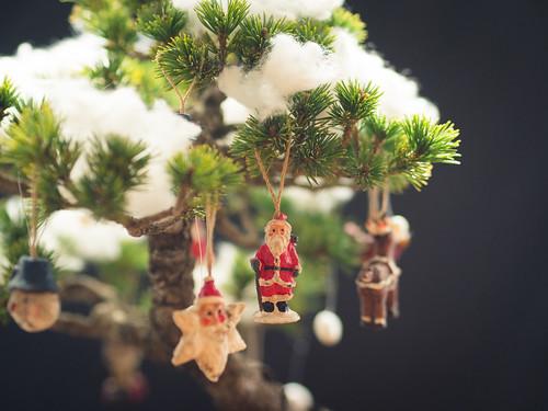 Christmas Bonsai!_2