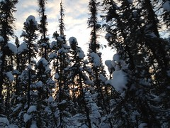 Sunset while dogsledding