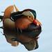 Mandarin Duck, London Wetland Centre, Barnes by craig.denford
