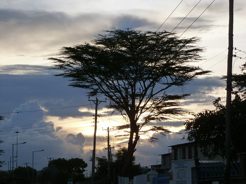 sky cloud tree silhouette kenya dusk nairobi cable acacia shortrains