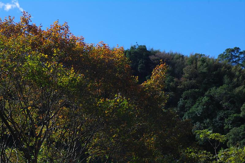 北橫 - 山巒楓情