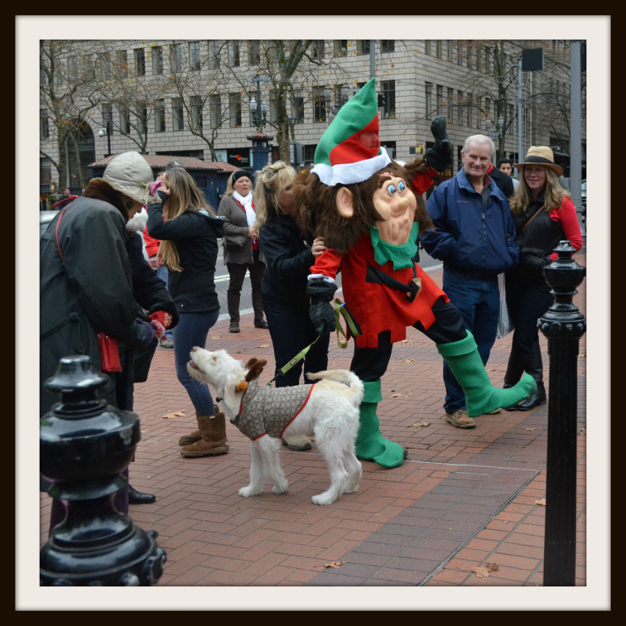 DSC_0701_dog_elf_framed