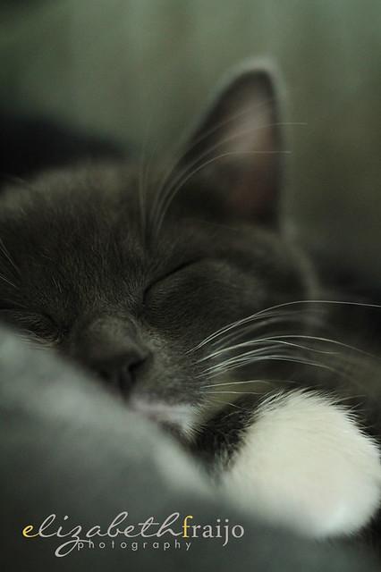 Kitty02W