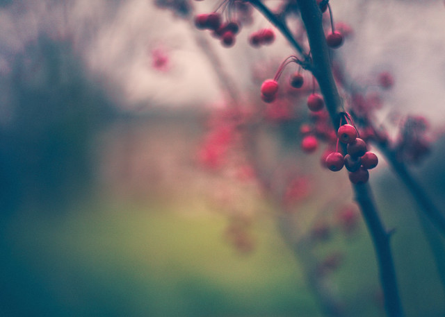 berries and bokeh