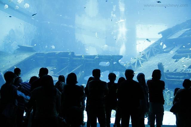 RWS S.E.A Aquarium 410