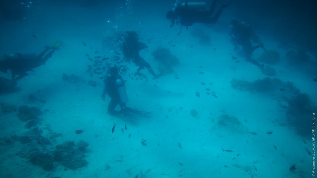 Дайвинг на Боракае: кормление рыбок