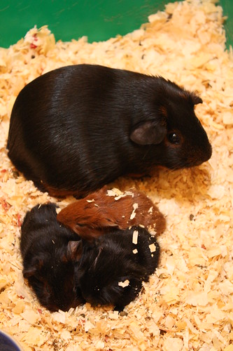 Blackie's Babies are Born!