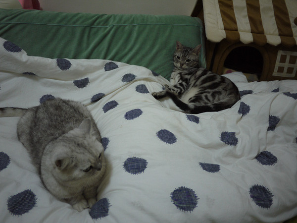2因為他剛剛要過去姐姐旁邊睡,結果被揍了!XD