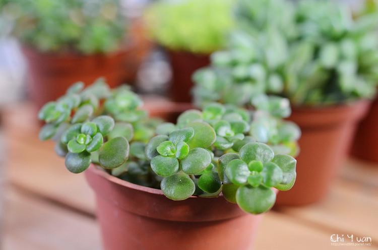 2012多肉植物24.jpg