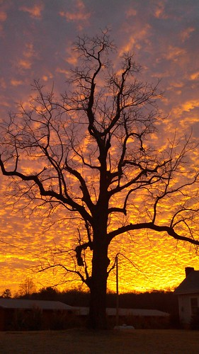 trees tree sunrise flickrandroidapp:filter=none