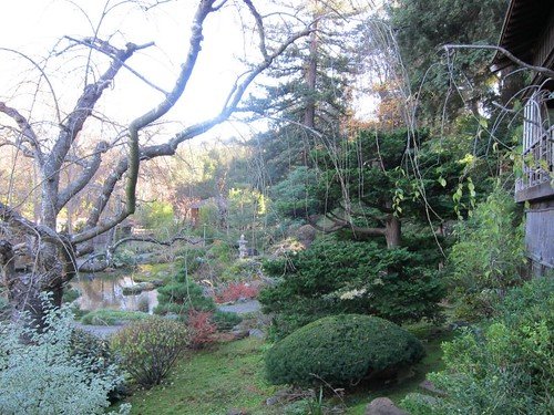 Hakone Japanese Gardens, Saratoga, CA, tree IMG_2407