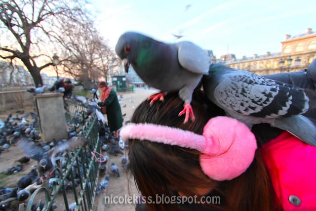 Nicole tan and pigeons
