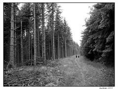 2011-06-08_Bois de Mazan