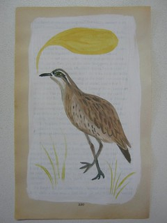 curlew jan 13