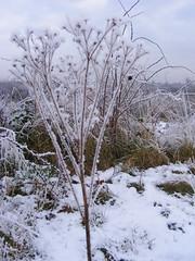 Snow at Sixfields