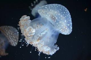 jelly_fish_2_by_ammarkov1-d5ha476