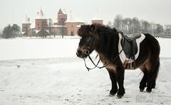 Sniego arkliukas