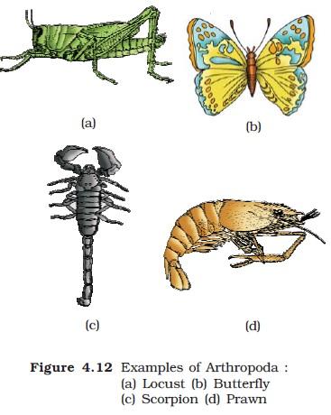 Ncert Class Xi Biology Chapter 4 Animal Kingdom Aglasem Schools