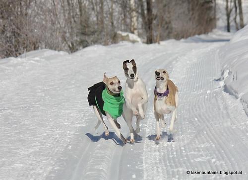 Camaro, Killah und Micra beim Whippettreffen Kaunertal
