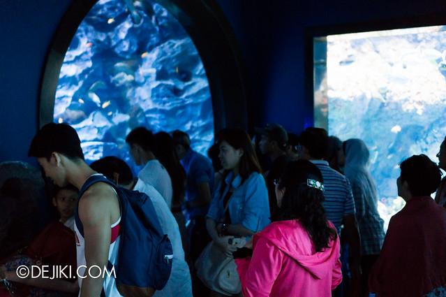S.E.A. Aquarium - Moray Eel crowd