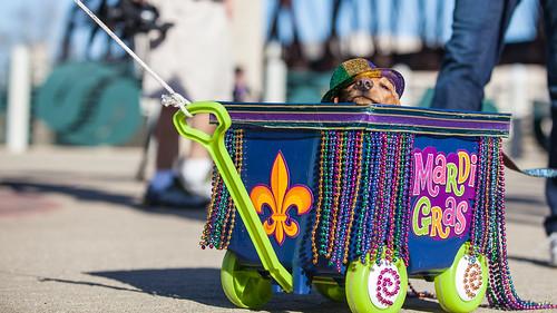 Krewe of Barkus and Meoux Pet Parade, Shreveport, LA