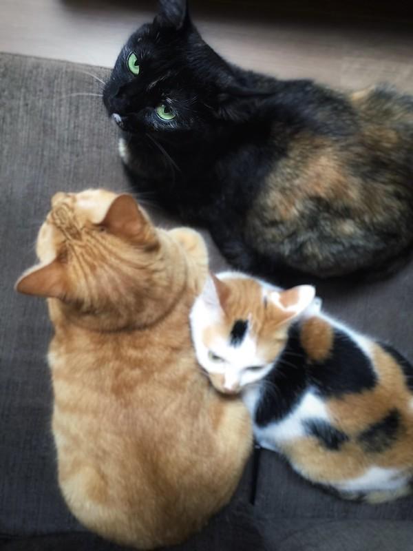 cat press voltagebd Images