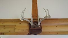 Mounted above the door