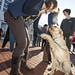 20121208_mac_dogdays_060